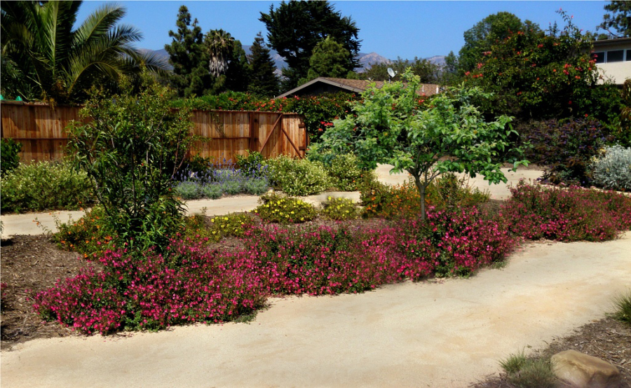 Rain Garden Design. Water Harvesting Basins With Fruit Trees And Flowering  Plants